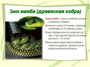 Змея мамба (древесная кобра) Черная мамба - одна из наиболее опасных и ядовит