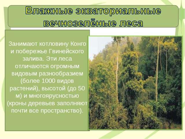 Занимают котловину Конго и побережье Гвинейского залива. Эти леса отличаются...