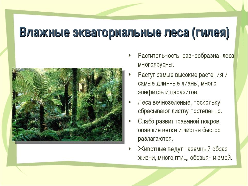 Влажные экваториальные леса (гилея) Растительность разнообразна, леса многояр...