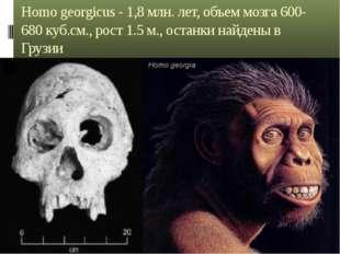 Homo georgicus - 1,8 млн. лет, объем мозга 600-680 куб.см., рост 1.5 м., оста