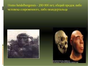 Homo heidelbergensis - 200 000 лет, общий предок либо человека современного,