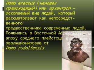 Homo erectus(человек прямоходящий) или архантроп— ископаемый вид людей, кот