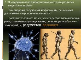 Проведем анализ филогенетического пути развития вида Homo sapiens. Как видно