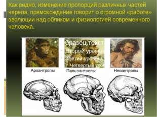 Как видно, изменение пропорций различных частей черепа, прямохождение говорит