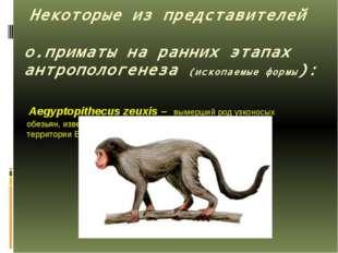 Некоторые из представителей о.приматы на ранних этапах антропологенеза (иско