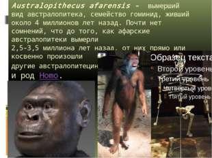 Australopithecus afarensis - вымерший видавстралопитека, семейство гоминид,