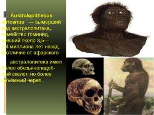 Australopithecus africanus —вымерший вид австралопитека, семейство гоминид,