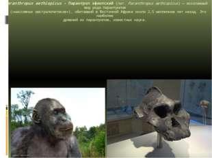 Paranthropus aethiopicus - Парантроп эфиопский(лат.Paranthropus aethiopicus