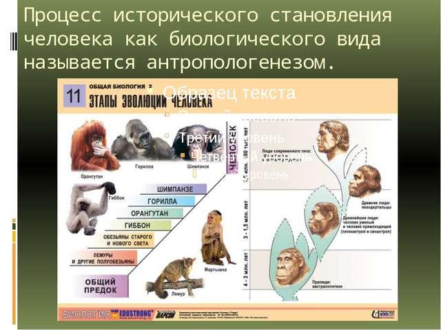 Процесс исторического становления человека как биологического вида называется...