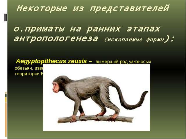 Некоторые из представителей о.приматы на ранних этапах антропологенеза (иско...