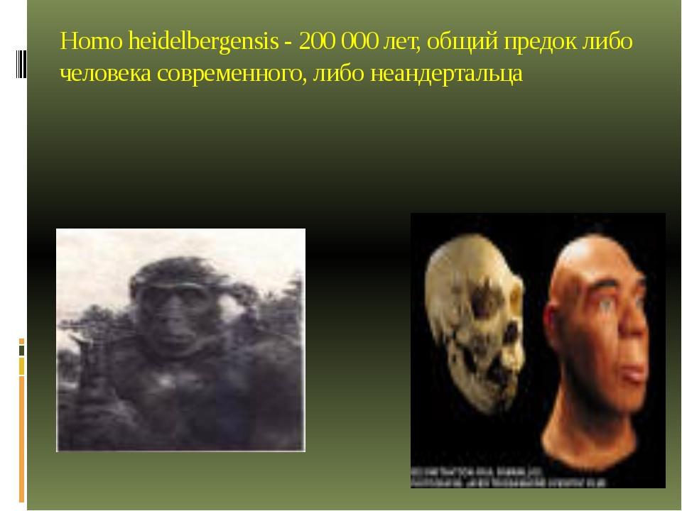 Homo heidelbergensis - 200 000 лет, общий предок либо человека современного,...