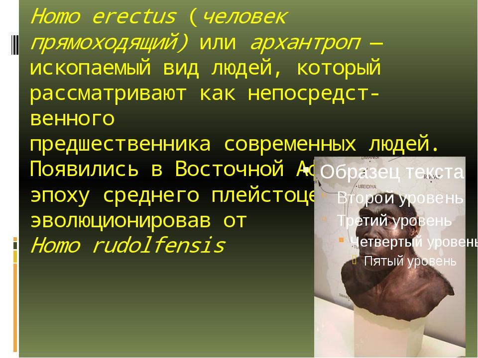 Homo erectus(человек прямоходящий) или архантроп— ископаемый вид людей, кот...