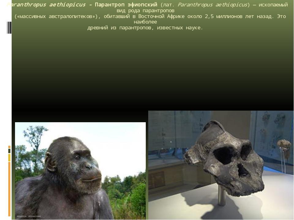 Paranthropus aethiopicus - Парантроп эфиопский(лат.Paranthropus aethiopicus...