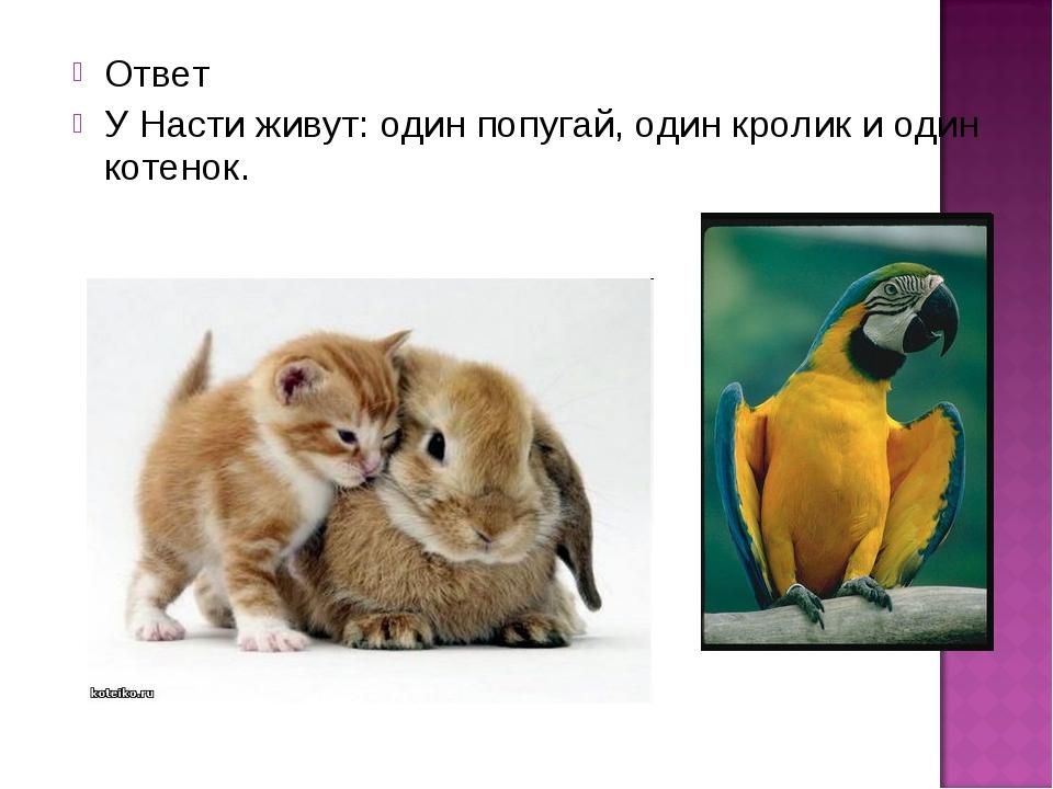 Ответ У Насти живут: один попугай, один кролик и один котенок.