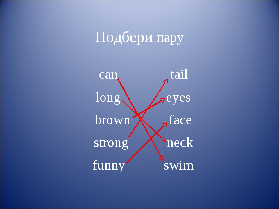 Подбери пару сan tail long eyes brown face strong neck funny swim