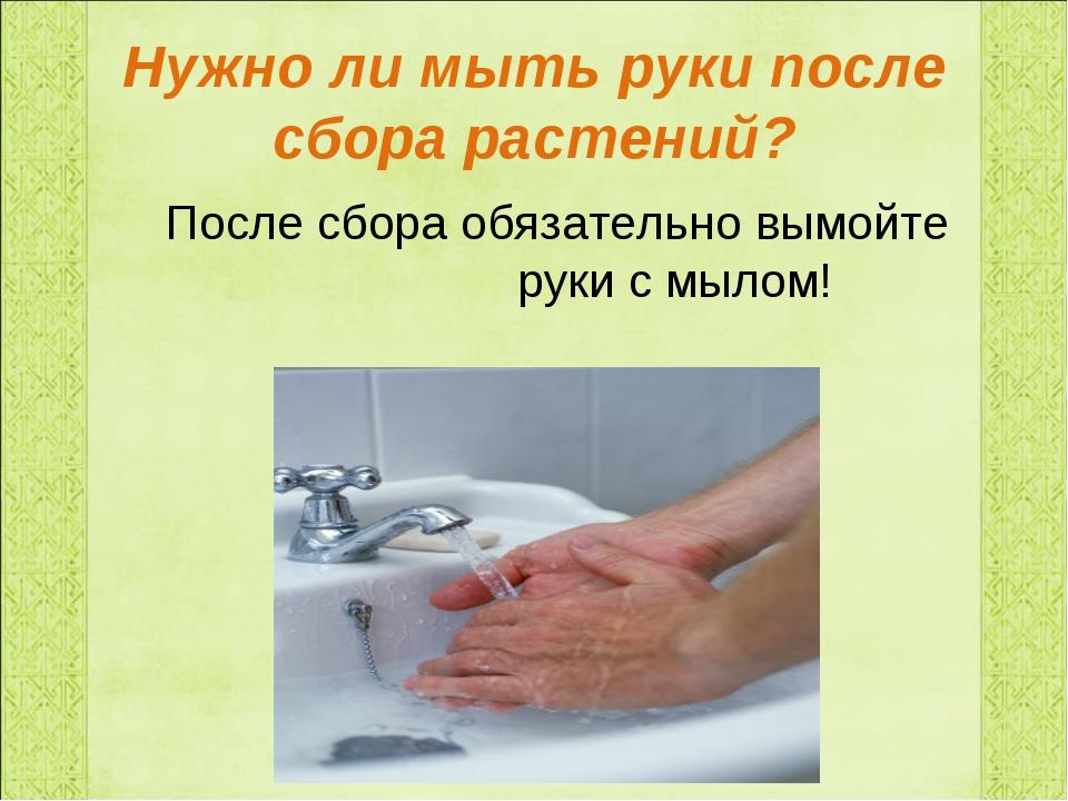 Нужно ли мыть руки после сбора растений? После сбора обязательно вымойте руки...