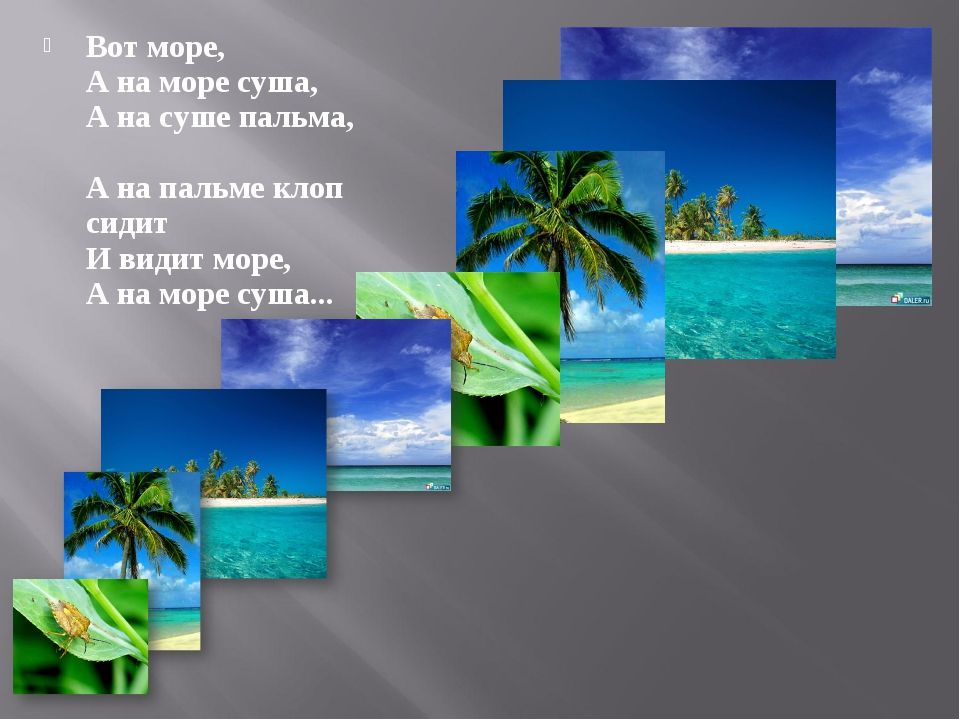 Вот море, А на море сyша, А на сyше пальма, А на пальме клоп сидит И видит мо...