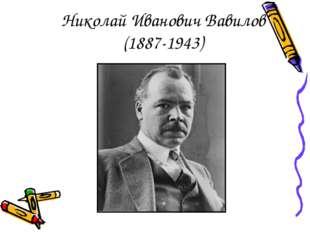 Николай Иванович Вавилов (1887-1943)