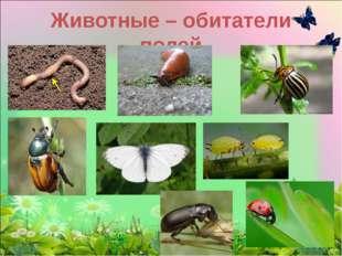 Животные – обитатели полей