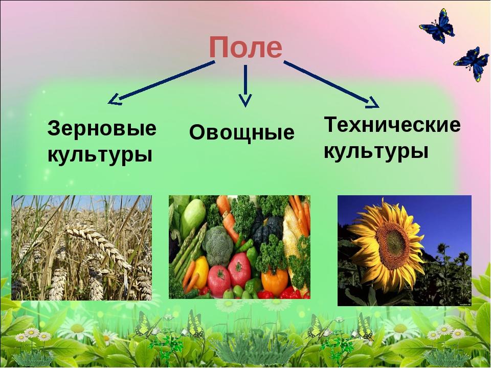 Поле Зерновые культуры Технические культуры Овощные