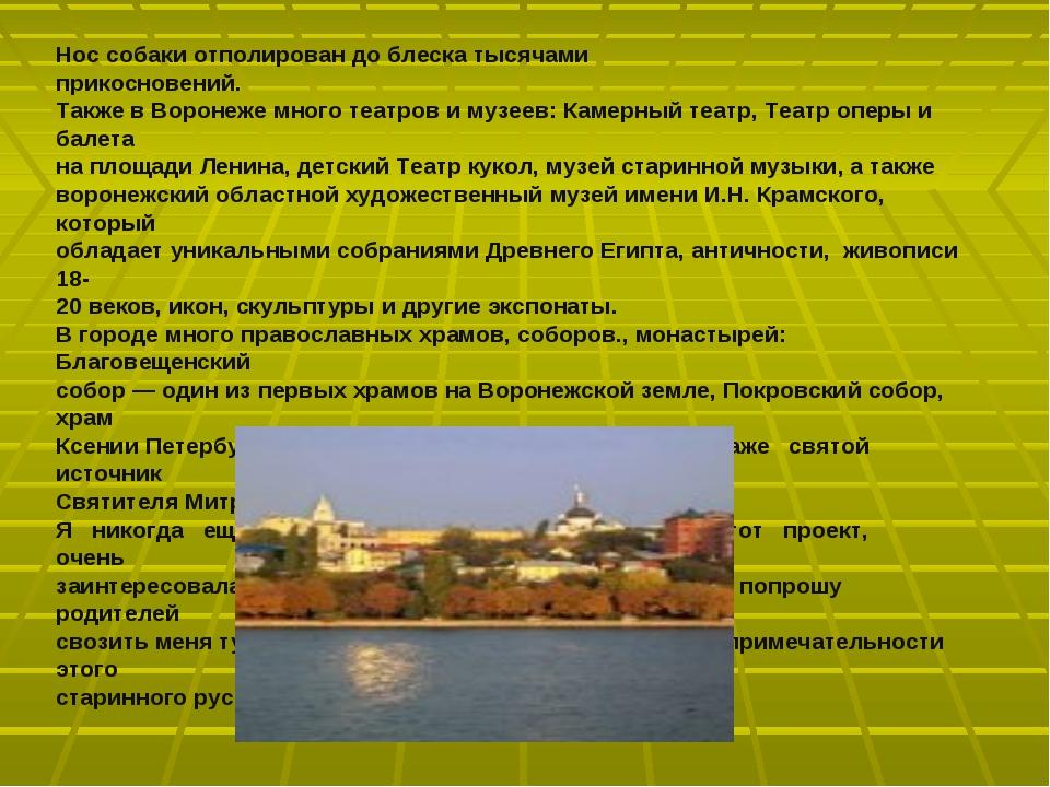 Нос собаки отполирован до блеска тысячами прикосновений. Также в Воронеже мно...