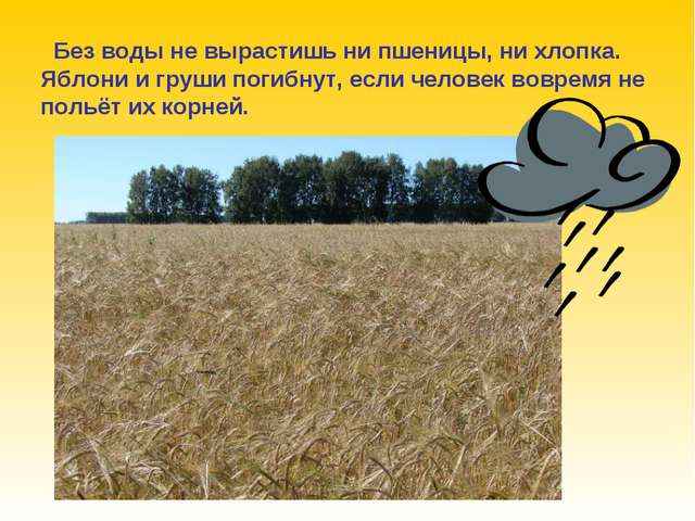 Без воды не вырастишь ни пшеницы, ни хлопка. Яблони и груши погибнут, если ч...