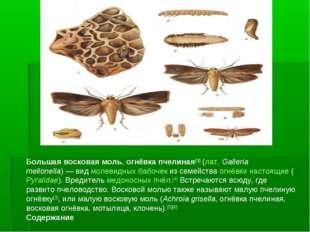 Большая восковая моль, огнёвка пчелиная[3] (лат.Galleria mellonella)— вид м