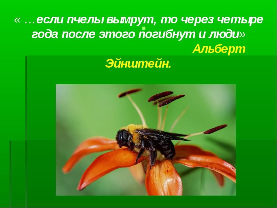 « …если пчелы вымрут, то через четыре года после этого погибнут и люди» Альб...
