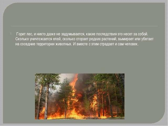 Горит лес, и никто даже не задумывается, какие последствия это несет за собо...