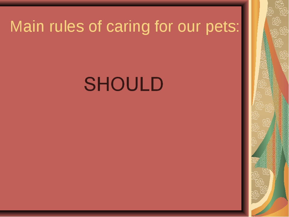 Main rules of caring for our pets:
