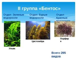 II группа «Бентос» Отдел Зеленые водоросли Отдел Бурые водоросли Отдел Красны