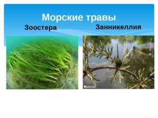 Морские травы Зоостера Занникеллия