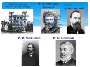 Севастопольская биологическая станция Н. Н. Миклухо-Маклай А. О. Ковалевский