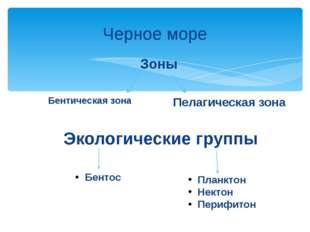 Черное море Бентическая зона Пелагическая зона Зоны Экологические группы Бент