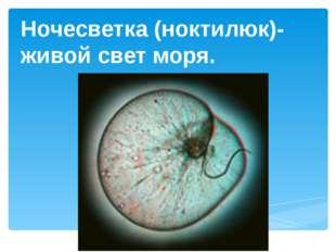 Ночесветка (ноктилюк)-живой свет моря.
