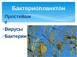 Простейшие Вирусы Бактерии Бактериопланктон