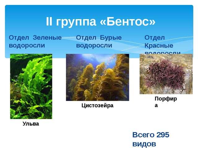 II группа «Бентос» Отдел Зеленые водоросли Отдел Бурые водоросли Отдел Красны...