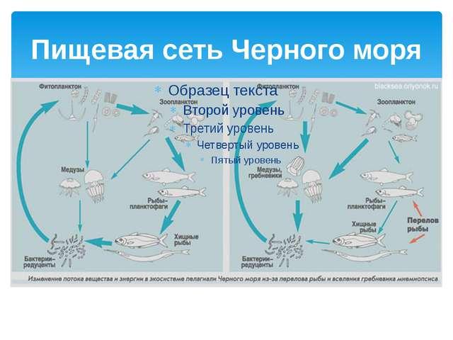 Пищевая сеть Черного моря