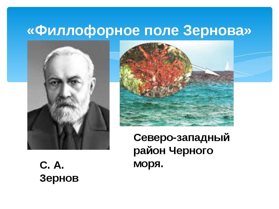 «Филлофорное поле Зернова» С. А. Зернов Северо-западный район Черного моря.