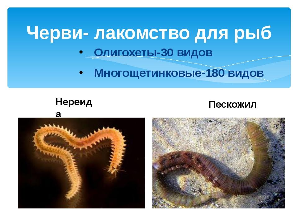Черви- лакомство для рыб Олигохеты-30 видов Многощетинковые-180 видов Пескожи...