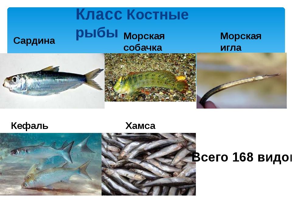 Класс Костные рыбы Сардина Хамса Кефаль Морская игла Морская собачка Всего 16...