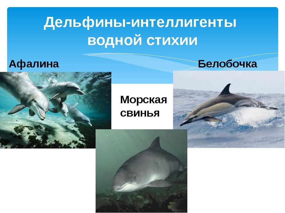 Дельфины-интеллигенты водной стихии Афалина Белобочка Морская свинья