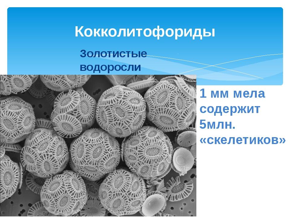 1 мм мела содержит 5млн. «скелетиков» Кокколитофориды Золотистые водоросли