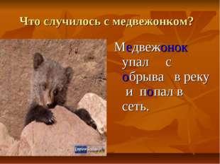 Что случилось с медвежонком? Медвежонок упал с обрыва в реку и попал в сеть.