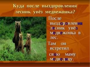 Куда после выздоровления лесник увёз медвежонка? После выздоровления лесник у