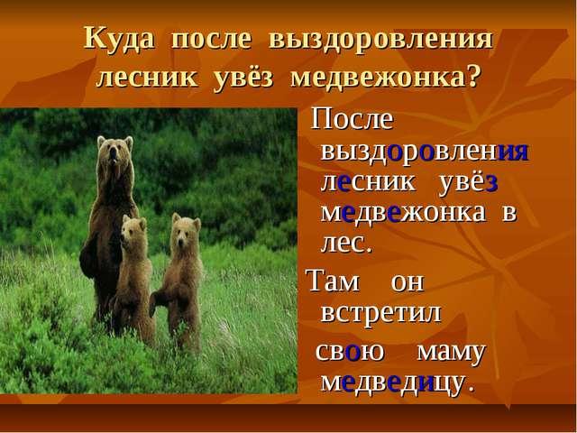 Куда после выздоровления лесник увёз медвежонка? После выздоровления лесник у...