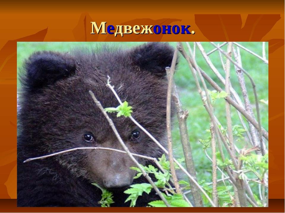 Медвежонок.