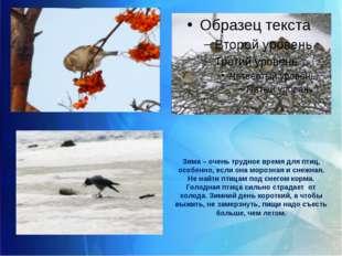 Зима – очень трудное время для птиц, особенно, если она морозная и снежная. Н