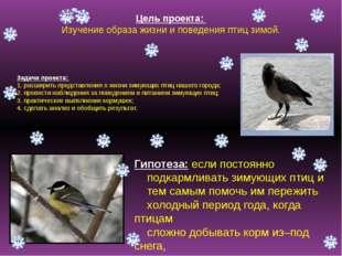 Цель проекта: Изучение образа жизни и поведения птиц зимой. Задачи проекта: 1