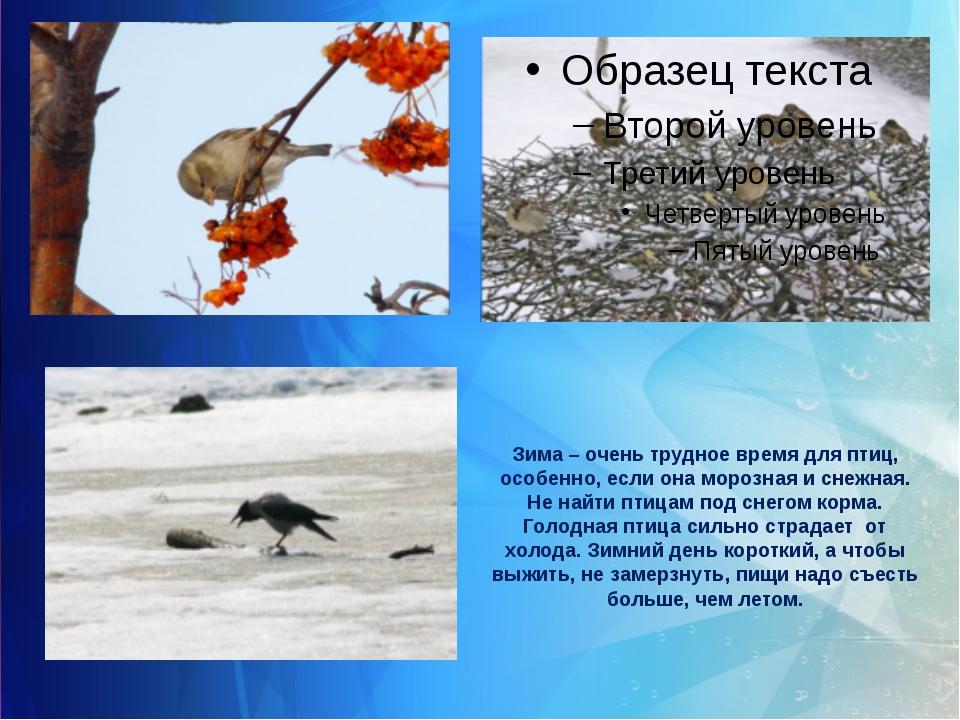 Зима – очень трудное время для птиц, особенно, если она морозная и снежная. Н...